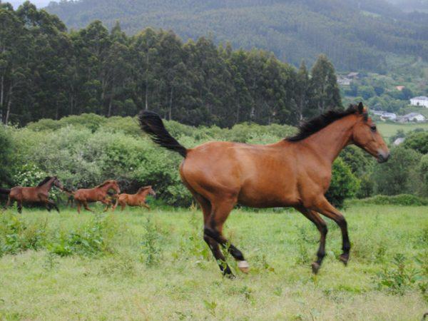 caballo-venta-mogor